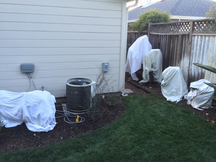 Protecting our fruit trees from the freezing nights